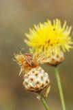Anomalie sur la fleur jaune images stock