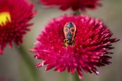 Anomalie sur une fleur photographie stock