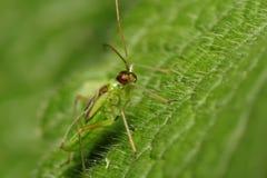Anomalie verte sur la feuille verte. Instruction-macro photos stock