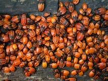 Anomalies d'insectes en bois Image stock