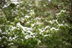 Anomalies de temps Neige en mai photos stock