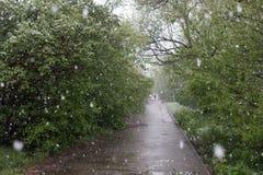 Anomalies de temps Neige en mai photo stock