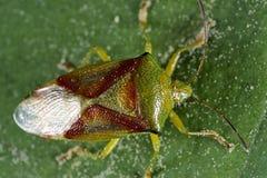 Anomalies et coléoptères Photo stock