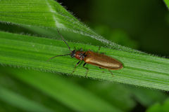 Anomalies et coléoptères Photo libre de droits