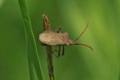 Anomalies et coléoptères Image libre de droits