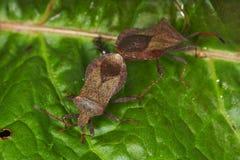 Anomalies et coléoptères Photographie stock libre de droits