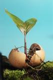 anomalii życia roślina Zdjęcia Royalty Free