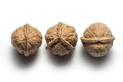 Anomaly of nature on a walnut Stock Photography