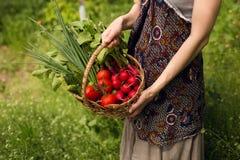 Anonumys kvinnor som mycket rymmer i händer en vide- korg av grönsaker i hans trädgård Collage av nya grönsaker royaltyfri bild