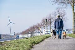 Anonymoud man som går hans hundkapplöpning arkivbilder