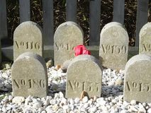 Anonymous gravestones. Gravestones with numbers on a graveyard Royalty Free Stock Photo