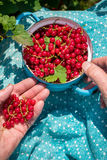 Anonymous senior woman in her garden and homegrown redcurrants Stock Images