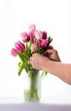 Anordnen der Blumen Stockbild