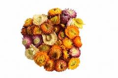 Anordnung der künstlichen Blumen lokalisiert auf weißem Hintergrund Lizenzfreie Stockfotografie