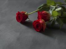 Anordnung der roten Rosen für ein Begräbnisgrau Stockbild