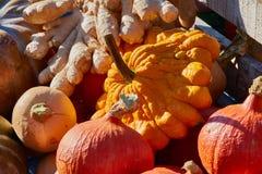 Anordnung für bunte Minikürbise und anderes Gemüse auf einem lokalen Markt Stockbild