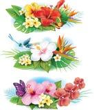 Anordnung von den tropischen Blumen Lizenzfreie Stockbilder