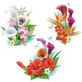 Anordnung von den tropischen Blumen lizenzfreie abbildung
