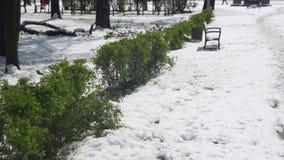 Anormales Wetter im April Frühlings-Park mit grünen Büschen und den Bäumen bedeckt mit Schnee stock footage