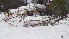 Anormales Wetter im April im Frühjahr Gefallene Bäume nach einem Schneesturm stock video footage
