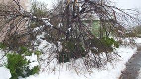 Anormales Wetter im April im Frühjahr Gefallene Bäume nach einem Schneesturm stock footage
