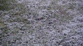 Anormalna pogoda Śnieg iść Zielona trawa w Kwietniu przy wiosną zbiory