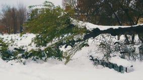 Anormalna pogoda w Kwietniu w wiośnie Spadać drzewa po śnieżycy zdjęcie wideo
