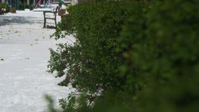 Anormalna pogoda w Kwietniu Wiosna park z Zielonymi krzakami i drzewami Zakrywającymi z śniegiem zbiory wideo