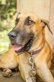 Anos do cão Imagem de Stock Royalty Free