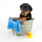 Another Bath?! Stock Image