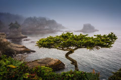 Another Bonsai Royalty Free Stock Photos