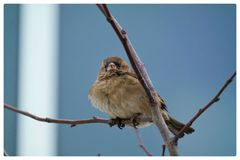 Another day in winter. Staying with birds Royalty Free Stock Image