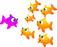 Another goldfish trend. Group of goldfish looking astonished at a rare and new one Stock Photos