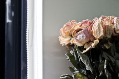 Another kind of beauty. Withered flower is another kind of beauty royalty free stock images