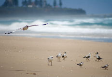 Another lazy day at the beach for the Seagull Royalty Free Stock Photos