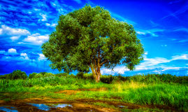 Another lonely tree. Lonely tree in the field Royalty Free Stock Photos