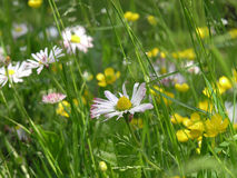 Another meadow. Closeup of meadow plants and flowers Stock Image