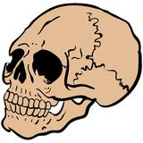 Another skull Stock Photography
