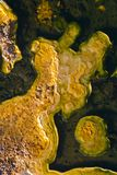 Another world. Mineral build-up in Geyser pools at Yellowstone National Park, USA royalty free stock images
