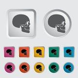 Anotomy skull Stock Photos