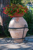 Anphora με τα λουλούδια Στοκ Φωτογραφία