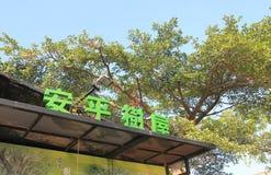 Anping παλαιό σπίτι Ταϊνάν Ταϊβάν δέντρων Tait και επιχείρησης Στοκ Εικόνες