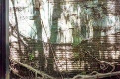 Anping-Baum-Haus Dieses alte Lager wird vorbei sich verzweigte von der alten Banyanbaumniederlassung bedeckt, die ist Lizenzfreie Stockfotos