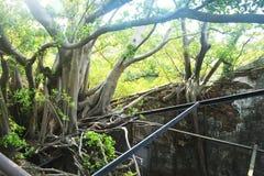 Anping domek na drzewie, Tajwan Fotografia Stock
