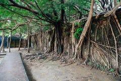 Anping Tree House in Tainan, Taiwan