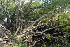Anping Treehouse, Ταϊβάν Στοκ φωτογραφία με δικαίωμα ελεύθερης χρήσης