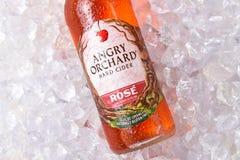 Anrgy fruktträdgård Rose Hard Cider Closeup arkivbild
