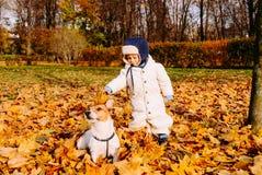 1-2 ans de garçon jouant avec l'animal familier amical de chien au parc d'automne de chute Photographie stock