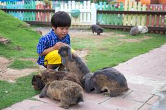 4 ans de jeu asiatique heureux d'enfant avec le groupe de lapins Images libres de droits