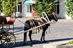 2014 ans du cheval, le cheval du mariage Photographie stock libre de droits